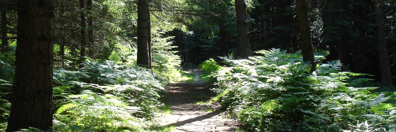 Les promenades en forêt